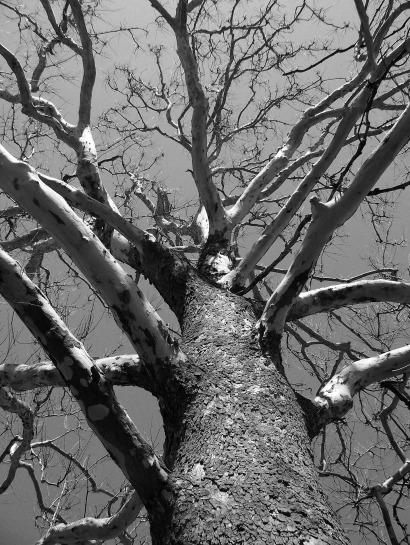 tree-17708_1920